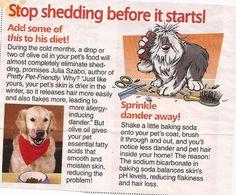 how dog dogs uk gublog moulting gudog in reduce sheds shedding prevent blog to
