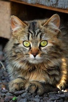 \If homeless cats could talk they would probably say give me shelter food companionship and love and I'll be yours for life.\ --Susan Easterly        Please adopt.