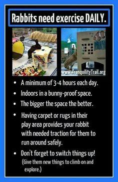 Bunnies need exercise