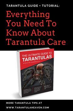 Tarantula Keepers Guide Ebook