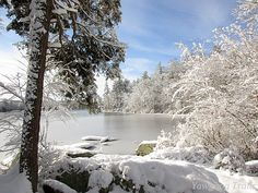 Winter view of Thrush Cove on Wincheck Pond at Camp #Yawgoog. Image by David R. Brierley.