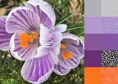 Crocus #ColorPlayFriday #123quilt #color #palette #colorpalette #colorinspiration #ilovecolor #fabric http://123quilt.blogspot.com/2016/08/color-play-friday-crocus.html