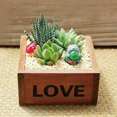 Have a look at our favorite succulent products. In this shop, you will find our ebooks, and affiliate links to succulent products. Succulent Planter Diy, Succulent Gardening, Flower Planters, Cactus Flower, Succulents In Containers, Succulents Diy, Planting Succulents, Wood Planters, Planter Boxes