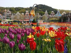 Everland, Korea