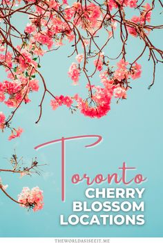 Looking for cherry blossoms in Ontario? Here are 10 Awesome Places to Find Cherry Blossoms in Toronto. I cherry blossom trees I things to do in Toronto I spring in Toronto I Toronto cherry blossoms I where to go in Toronto I Toronto Ontario Canada I places in Toronto I places to go in Toronto I places to go in Ontario I Ontario cherry blossoms I Toronto in the spring I Ontario travel I spring travel I Toronto travel I Canada Travel I flowering trees in Toronto I #Toronto #cherryblossoms… Toronto Vacation, Toronto Travel, Blossom Trees, Cherry Blossoms, Canada Travel, Travel Usa, Japan Travel Tips, Travel Abroad, Alberta Travel