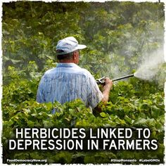 Herbicide Linked To Depression In Farmers. More Here: http://psychcentral.com/news/2013/08/04/herbicides-linked-to-depression-in-farmers/58011.html