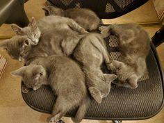 Foster Kittens, The Fosters, Animals, Animales, Animaux, Animal, Animais