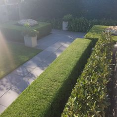 Precious Tips for Outdoor Gardens - Modern Arborvitae Landscaping, Privacy Landscaping, Front Yard Landscaping, Box Hedging, Hedging Plants, Easy Plants To Grow, Real Plants, Hedge Of Protection, Protection Prayer