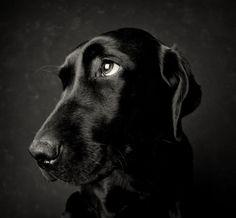 L'honnêteté du chien
