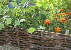 Faire ses bordures en plessis au potager - A. Petzold - Les Jardins de mon Moulin (52) - Rustica