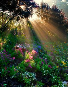 """you could think at the movie """"the secret garden"""", it could posted right out of it, but this is the beauty of nature, not a fantasy; Sunbeams in the forest. Beautiful World, Beautiful Gardens, Beautiful Places, Trees Beautiful, Beautiful Morning, Beautiful Sunrise, All Nature, Amazing Nature, Beautiful Photos Of Nature"""