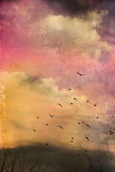 https://flic.kr/p/bkZRbd | Orchid Twilight |  Distressed Textures Website  Facebook  Pinterest