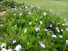 Verdes& flores