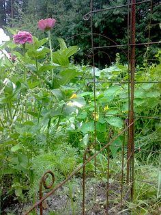 Parasta puutarhasta: Harjateräs taipuu moneksi