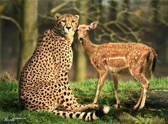 Peaceful Predators and Prey