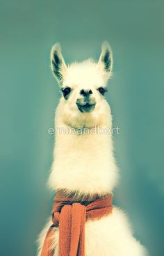 High quality Llama  inspired iPhone Cases & Skins by independent artists and designers from aroun...