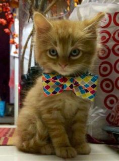 When I grow up I will be a surgeon. I already have the bow tie and the superior look!