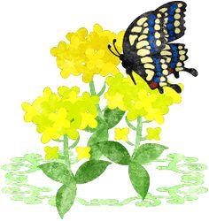 春のフリーのイラスト素材綺麗な菜の花のイラスト  Free Illustration of spring Illustration of beautiful brassica