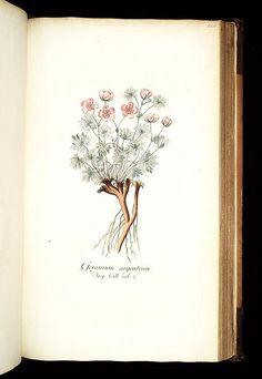 Icones plantarum rariorum (LINK=>DOWNLOAD IMAGE AND FREE DOWNLOAD FULL BOOK; PUBLIC DOMAIN)