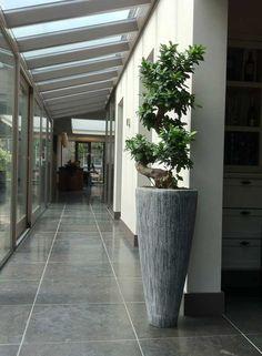 Big Indoor Plants, Fake Plants, Indoor Garden, Green Plants, Potted Plants, Home And Garden, Garden Art, Container Plants, Container Gardening