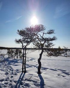 Torronsuon kansallispuisto, Tammela