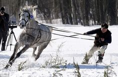 A skier attempts to stay upright as he is dragged along by the reins of a galloping horse ...
