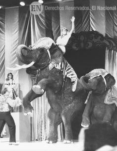 Concurso Miss Venezuela 1984. Pilin León encima de un elefante en Macuto Sheraton. Caracas, 28 de abril de 1984. (ARCHIVO EL NACIONAL)