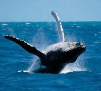 Тропические водопады, пингвины и морские слоны - RuColumb
