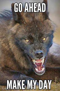 Wildlife, Scary Wolf by ~Schpakowski Wolf Spirit, Spirit Animal, Beautiful Creatures, Animals Beautiful, Scary Wolf, Photo Animaliere, Wolf Love, Wolf Pictures, Wild Wolf