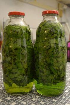 Medvedí cesnak - tinktúra (fotorecept) - obrázok 5 Health And Wellness, Health Fitness, Natural Antibiotics, Home Canning, Fruit Tea, Weight Loss Detox, Herbal Tea, Organic Beauty, Pesto