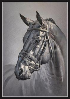 Новости Horse Pencil Drawing, Horse Drawings, Animal Drawings, Art Drawings, Clown Paintings, Horse Oil Painting, Colored Pencil Artwork, Horse Artwork, Horse Portrait