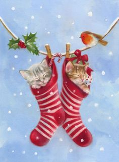 Stockings with Kittens