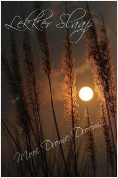 Beautiful Swan, Goeie Nag, Afrikaans, Sweet Dreams, Good Night, Celestial, Sunset, Outdoor, Nighty Night
