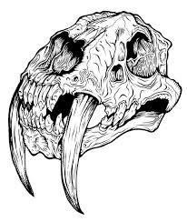Resultado de imagem para cranio de dinossauros