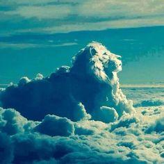 Lion,cloud or graphics?