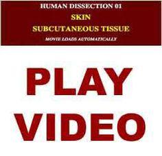 CADAVER DISSECTION VIDEOS subcutaneous tissue