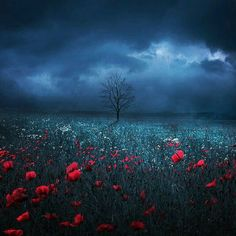 dark field by Barbara Florczyk - Photo 129567465 - Our Planet Earth, Victor Hugo, Photo Manipulation, Landscape Photography, Flower Photography, Photo Art, Scenery, Victoria, Fine Art