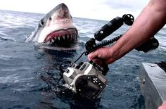 Shark! Great White Image Circa Jaws Captured by Film Crew Goes Viral