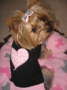 Layla the Yorkie in pink