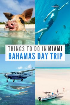 A not to be missed epic adventure: The Miami to Bahamas Day Trip by plane is an amazing Day Tour experience visiting the Swimming Pigs at Staniel Cay Florida Travel, Travel Usa, Canada Travel, Bahamas Pigs, Jamaica, Bahamas Honeymoon, Bahamas Vacation, Italy Vacation, Puerto Rico