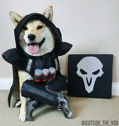 Reaper Doge by @Outside_the_Vox