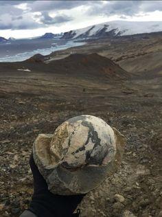 В Антарктиде обнаружены несметные полчища динозавров! - 3 Января 2017 - Наша Планета.Мир вокруг нас