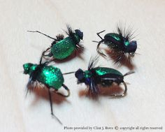 Japanese Beetle Fly