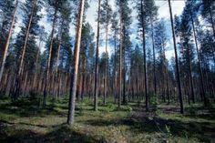 Suomen ei pitäisi mennä niin usein EU:n selän taakse piiloon, arvostelee vasemmistoliitto aikeita yhtiöittää Metsähallitus. EU ei edes vaadi yhtiöittämistä.