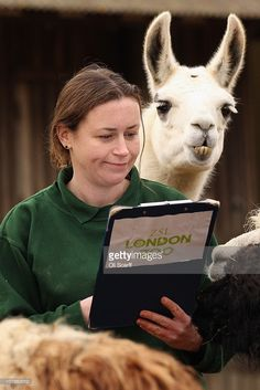 Zoo keeper Angela Ryan makes note of the lamas as she conducts ZSL London Zoo's annual stocktake on January 4, 2011 in London, England. London Zoo is home to over 16,000 animals from over 700 different species including over 10,000 invertebrates, 4,700 fish and 100 reptiles.