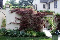 Fagus sylvatica 'Roseomarginata' espalier Chanticleer.  Love the containers across upper ledge.
