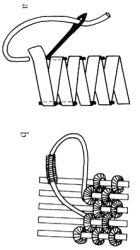 Las tiras Lahn sí cubren Distancias Pequeñas de Antes y Antes de Cada y Plegado (inclinacion) Asegurados ONU de la estafa hilo de seda
