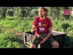 Pomodori e olive liberi dalle mafie, Cooperativa Pietra di Scarto, Cerignola, Puglia.  Scopri le storie dei produttori di #SolidaleItaliano nei reportage realizzati da Aldo Pavan