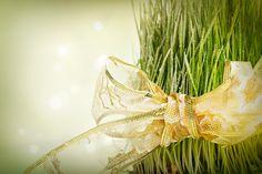 "Christmas green ""fur"" (wheat) - http://grannystips.com/christmas-green-fur-wheat/"