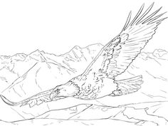 Click to see printable version of Bald Eagle Soaring coloring page